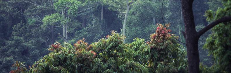 v thajské džungli